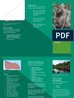 English Endangered Animal Brochure Scribd.docx