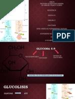 Glucolisis.pptx Jeje Salu2