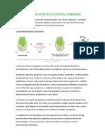 291053867-Ingenieria-Genetica-en-Plantas-y-Animales-ecologia.docx