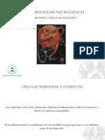 03.- Neuronas y Células Gliales I