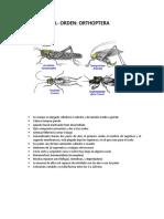 Fichas Tecnicas Aragon -Entomologia