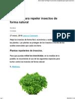 6 Plantas Para Repeler Insectos de Forma Natural