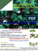 7. Algodonero (38)2016-II