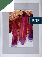 Vacker ancho biológico.pdf
