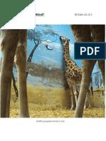 zoos-opinion piece- kaela jia-la - google docs