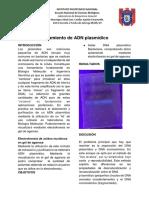 Aislamiento de ADN plasmídico