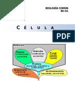 Bc01 - La Celula