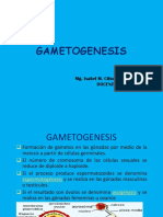 Sem 2 Gametogenesis