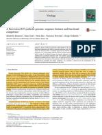 A Parvovirus B19 Synthetic Genome