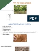 Cultivo de Maracuya Exposicion %5bautoguardado%5d