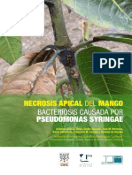 necrosis_apical_del_mango.pdf