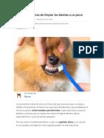 Higiene dental para mascotas