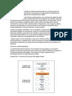 marco teorico de biosisntesis del colageno.docx