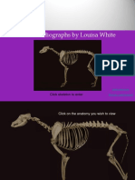 Radiological Anatomy of the Dog