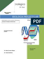 Practica 6 BIOLOGIA.docx