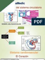 Histologia Cardiovascular