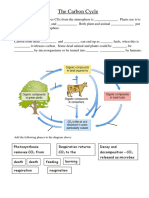 Carbon cycle worksheet.docx