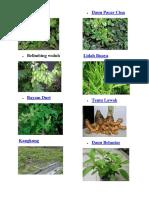 A Macam Tanaman Herbal