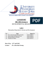 LAB REPORT 4 SBC.docx