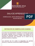 3. Embriologia Neuro y Arcos