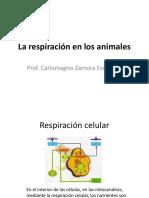 La Respiracion en Los Animales