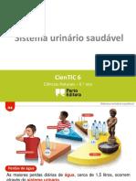 sistema urinario saudavel 4.pptx