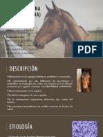 adenitis (2)