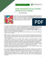 Struttura e Funzione Snc Osteonews