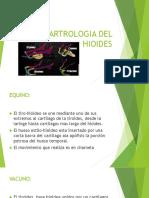 Artrologia Del Hioides