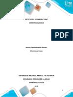 Protocolo de Laboratorio - Morfofisiología II