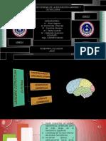 Neurobiología-cerebro Estructura Externa-grupo 3