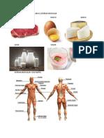Alimentos Adecuados Para El Sistema Muscular