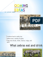 Zooming Zebras Jordan3