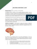 Glandula Pineal y Dimetiltriptamina