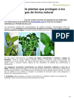 Asociaciones de Plantas Que Protegen a Los Cultivos de Plagas de Forma Natural