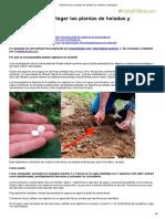 Aspirinas Para Proteger Las Plantas de Heladas y Patógenos