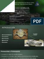 Cocodrilos Paleontologia de Vertebrados