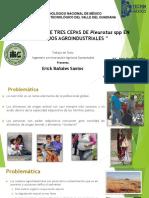Presentacion Pleurotus spp TESIS
