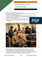 24RuminantAnesthesia2006.pdf