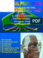 Tutorial Praktikum Model Otot & Saraf Facies
