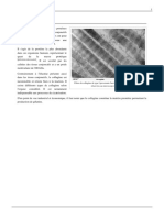 collagene.pdf