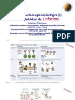 Clasen 6 Linfocitos Respuesta Adaptativaa