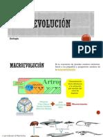 MacroEvolución5