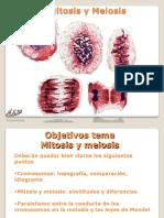 Tema 3 Mitosis y meiosis red2015_3_2D10_51.pdf