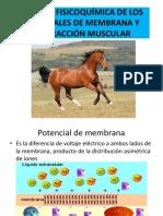 2016 Pot de Membrana Mónica