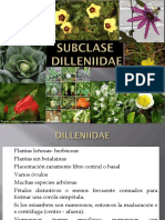 SUBCLASE DILLENIDAE2019