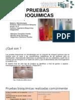 Pruebas Bioquimicas Bacterias