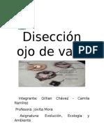 Disección ojo de vaca (2).docx