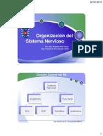 organizacion_del_sistema_nervioso.pdf
