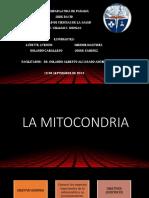 Historia de La Mitocondria